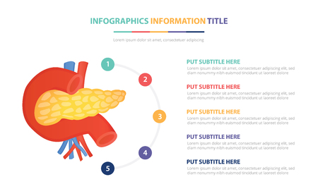 human pancreas anatomy infographic template concept with five points list and various color with clean modern white background - vector illustration