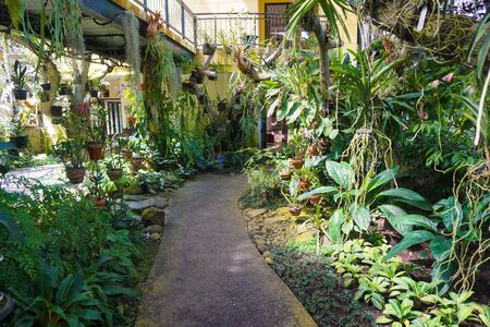 orchid house with small path walk or path way on center with various plant tree kind - indonesia photo 写真素材