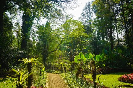 pavement on the middle of forest or jungle with bright sun and big tree on tropical paradise - indonesia photo