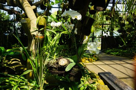 white orchid on the jungle of forest garden with green tropical country and pavement pathway on side - indonesia photo