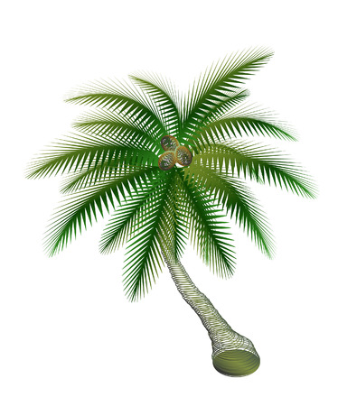 cocos: palm