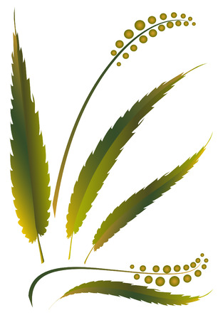 weed: grass weed