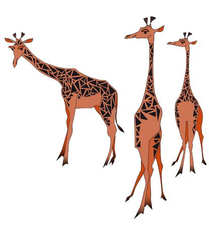 camelopardalis: giraffe