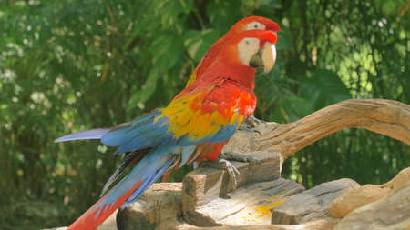 Blue and red, yellow Macaw Parrot.