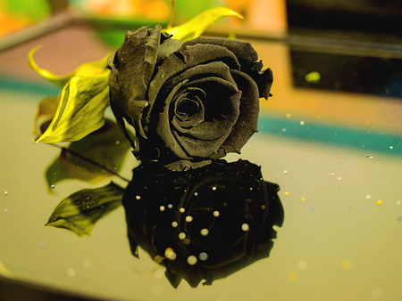 black rose mirrored with drops of tears