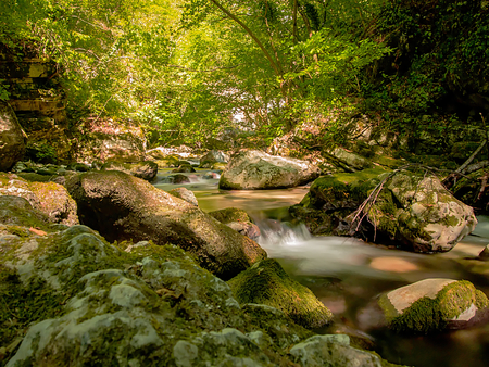 small stream of water immersed in wild nature and protected by mossy rocks and plants of a lush green forest discovered during a hiking on a summer day