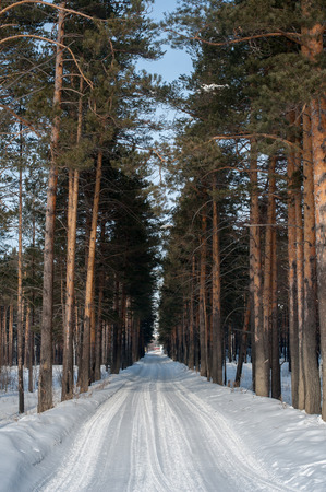 Winter road, forest with pine trees