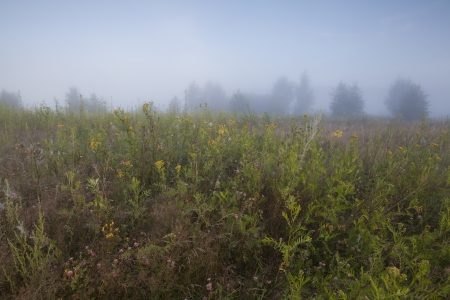 heralds: Cool, misty summer morning heralds the beginning of a hot day