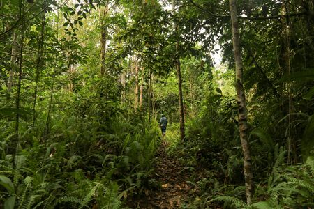 Local guide walk on the footpath through the dense jungle inthe frorest of Raja Ampat, West Papua province, Indonesia Stock Photo