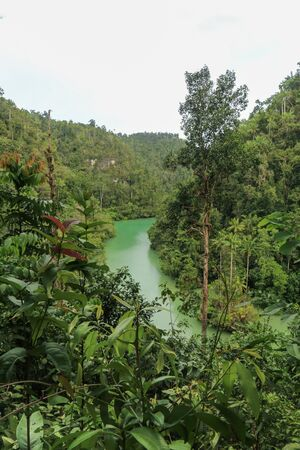 Green river through the dense jungle in the frorest of Raja Ampat, West Papua province, Indonesia