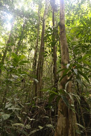 the dense jungle in the frorest of Raja Ampat, West Papua province, Indonesia Stock Photo