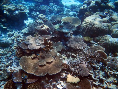 Colorful coral reefs with hard coral