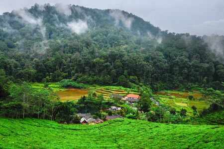 Rural mountain little village in the bottom of the valley with tea plantation and rainforest against overcast sky. Bogor district, west Java