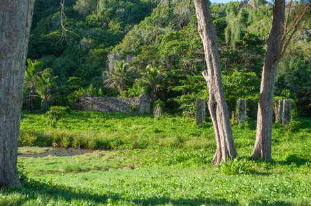 Lush vegetation on the bay of Anse Cocos in La Digue Island, Seychelles