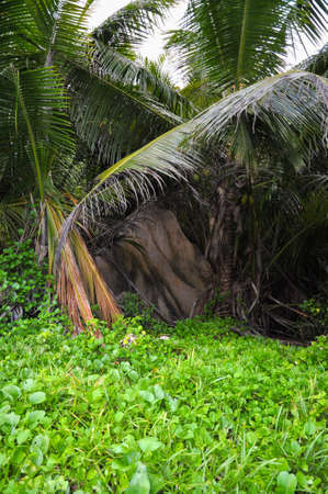 Lush vegetation on the bay of Anse Cocos in La Digue Island, Seychelles Stock Photo
