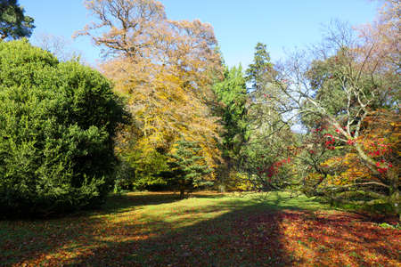 Colourful autumn trees at in a Park with tree shadow, England, UK
