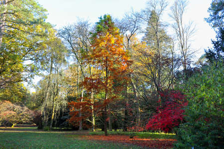 Colourful autumn trees at in a Park with tree shadow, England, UK Stock Photo