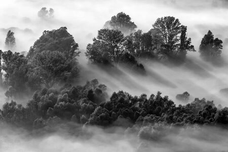 Sunrise on the forest with fog