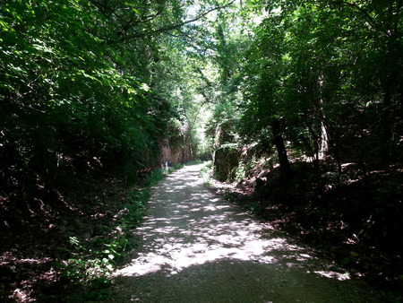 tortuous: shady woodland path in the Karst of Trieste