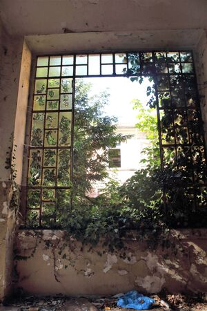 2019.06.13 - Limbiate, Milan, Italy, photographic reportage asylum in Mombello, abandoned psychiatric hospital window with broken glass and greenery in the background