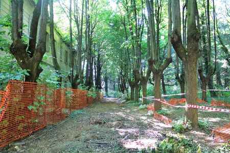 2019.06.16 - Limbiate, Milan, Italy, photographic reportage madhouse in Mombello, abandoned psychiatric hospital, tree-lined avenue with security fences