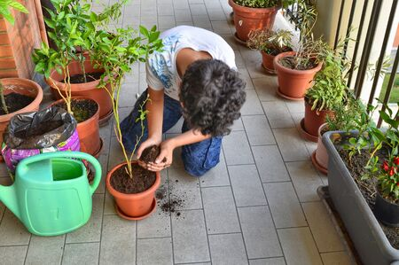 The blueberry plant has just been placed in its new pot, next to it we can see the green watering can with which it will be wet. The Caucasian boy with his hands took some soil to add Banco de Imagens