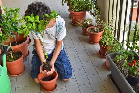 A young Caucasian boy is preparing to pot a blueberry plant, holding it gently, creating a vase with his hands. Protection and care.