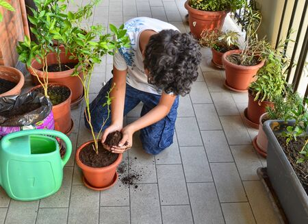 The blueberry plant has just been placed in its new pot, next to it we can see the green watering can with which it will be wet. The Caucasian boy with his hands took some soil to add