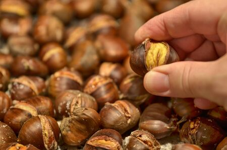 A metal baking pan filled with chestnuts roasted as far as the eye can see. A hand holds a chestnut between the fingers.