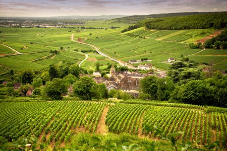 부르고뉴 (프랑스) 와인 지역의 포도원으로 덮인 언덕 스톡 콘텐츠