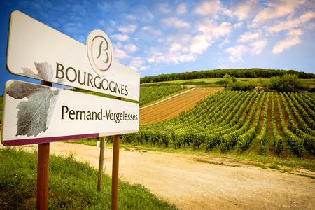 Wijngaarden in Pernand-Vergelesses. Bourgondië. Frankrijk