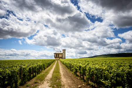 Burgundy, Clos de Vougeot. France. Stock Photo