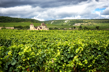 Burgundy, many chateau (castle) are surrounded by many acres of vineyards and are great wine producers. france