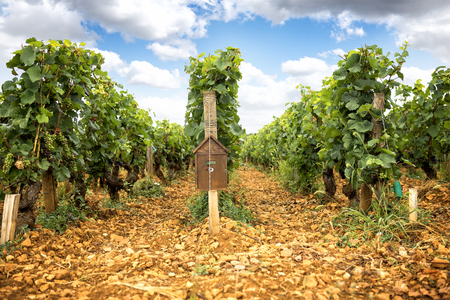 Burgundy. Vineyards along the wine route. france Stock Photo