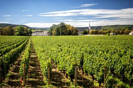 Burgundy, Montrachet. Chateau de Meursault. Cote d'Or. france Standard-Bild