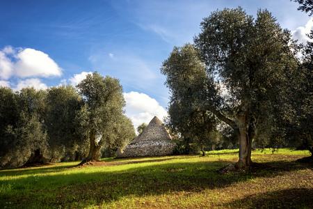 Trulli with olive grove. Val d'Itria - Apulia (Apulia) - Italy