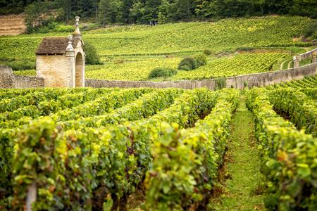 Hügel bedeckt mit Weinbergen in der Weinregion Burgund, Frankreich
