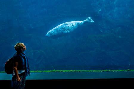 Gazes between curious seal and woman in the ocean aquarium Editorial