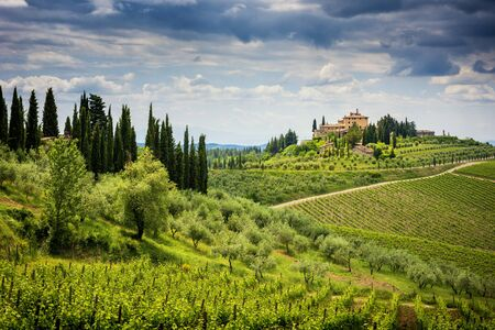 Chianti hills with vineyards and cypress. Tuscan Landscape between Siena and Florence. Italy