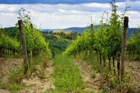 Chianti vineyards in Tuscany, Italy. Foto de archivo
