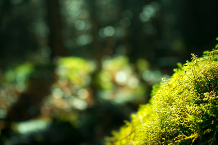 Close up of green moss. Sunlight in dark forest. Macro. Blurred background Фото со стока