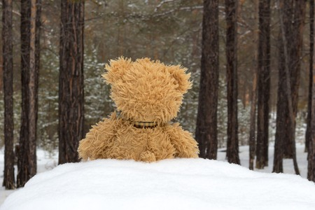 Teddy bear in winter forest Фото со стока