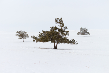 Winter landscape with snow and three woods on white background