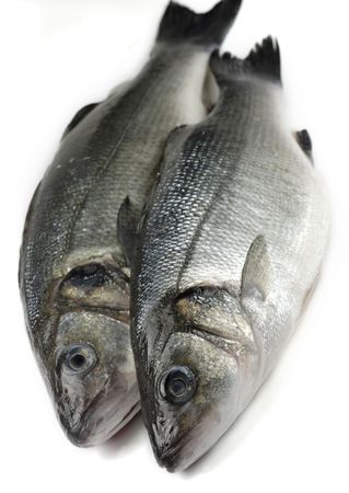 two fresh sea bass
