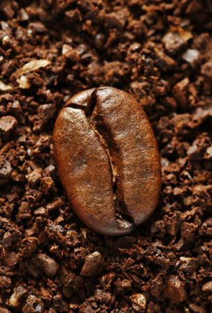 single coffee bean on a background of ground coffee Stock Photo - 3066202