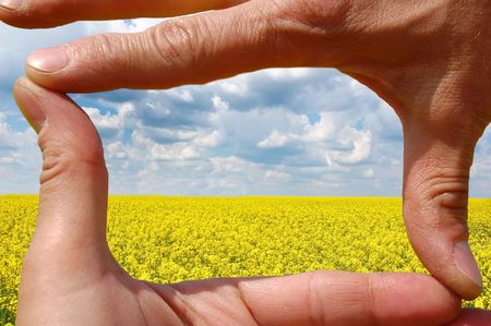Frame made of hands at wheat field photo