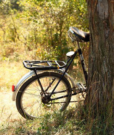 Bike near tree photo