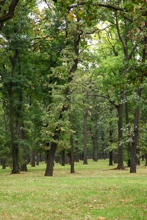 green forest  Stock Photo - 7500316