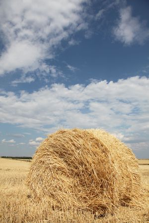 Golden bales in the countrysid photo