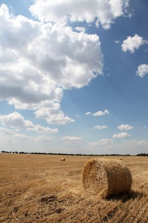 Golden Hay Bales in the countryside photo